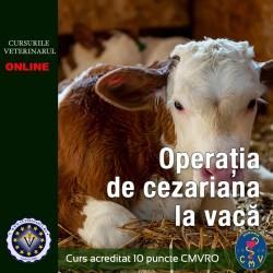 Operatia de cezariana la vaca