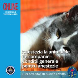 """Curs """"Anestezia la animalele de companie - Conditii generale pentru anestezie"""""""